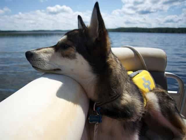 pet friendly florida keys boat rentals