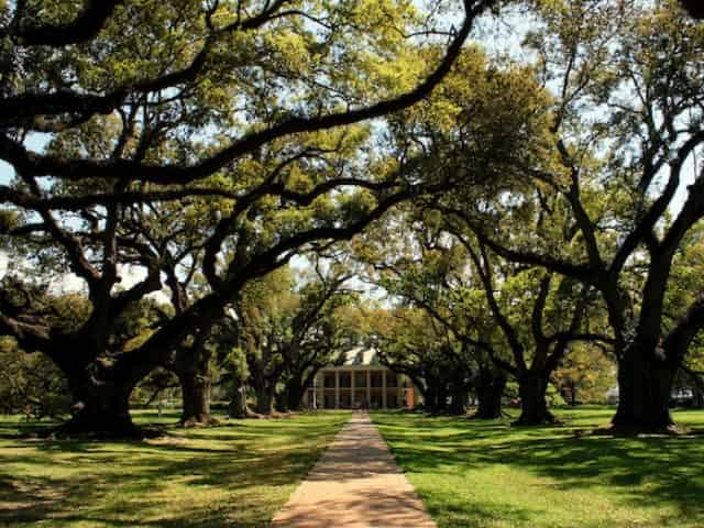 scenic views from oak alley plantation