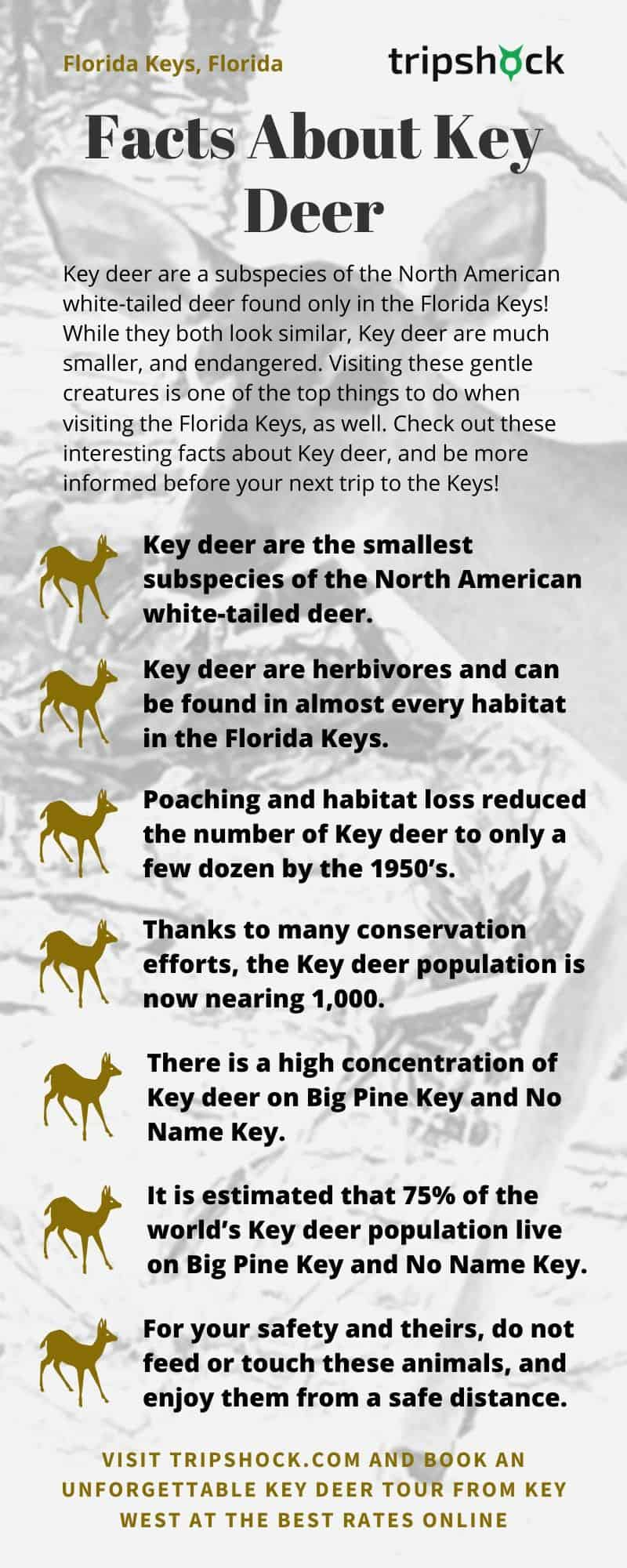 facts about florida keys key deer