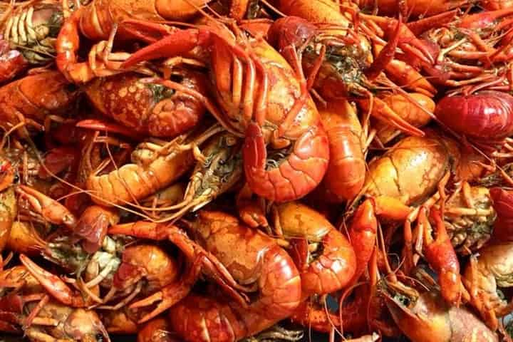 Food and Fun at the Zydeco & Crawfish Festival in Gulf Shores, AL