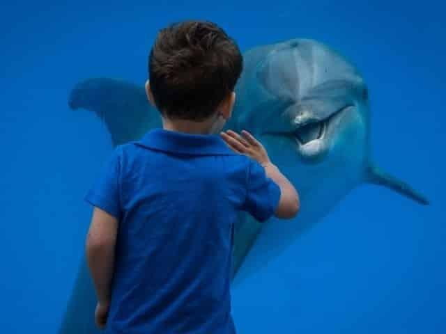 Dolphin interaction at Gulf World Marine Park