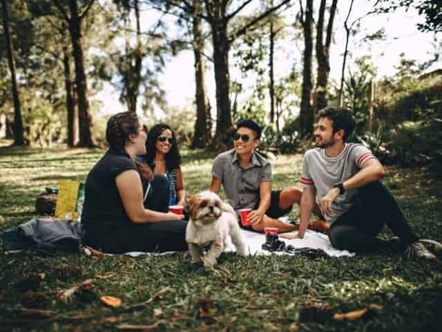 Pet friendly picnic in 30A Florida