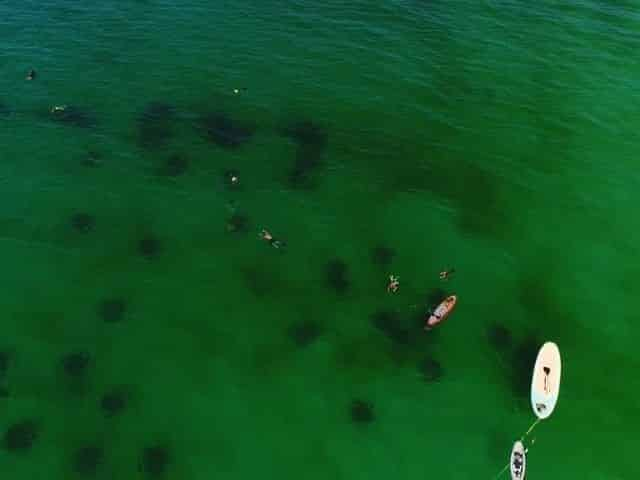 snorkeling tour in Santa Rosa Beach-30A