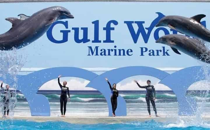 Visit the #1 Panama City Beach Marine Park: Shows, Tickets, Photos & More