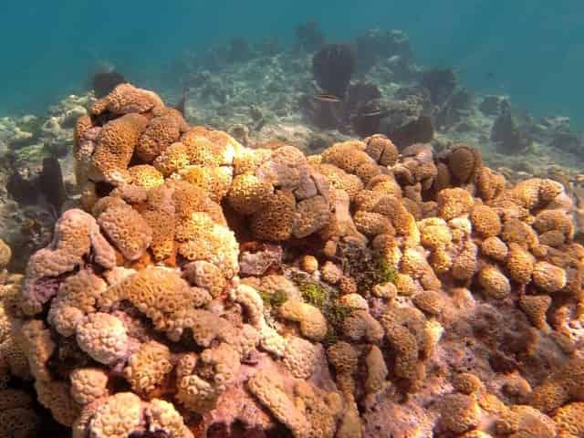 floridas barrier reef in key west fl