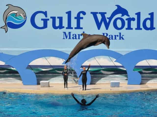 gulf world marine park in panama city beach, fl