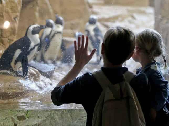 penguin exhibit at the audubon aquarium