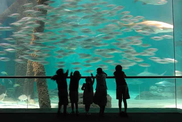 new orleans aquarium discount deals