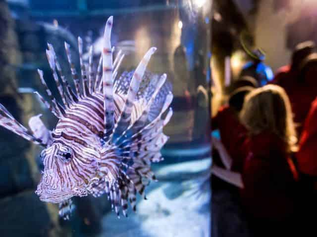 living in water at the aquarium