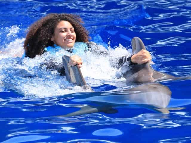 dolphin swim at gulf world marine park in panama city beach