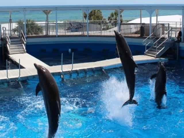 dolphins at the gulfarium on okaloosa island