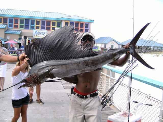 sailfish caught on okaloosa island pier
