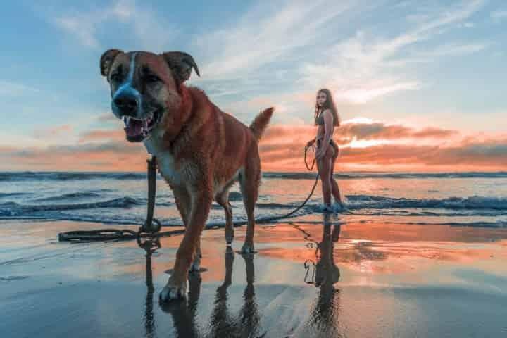 Planning a Pet Friendly Destin Vacation