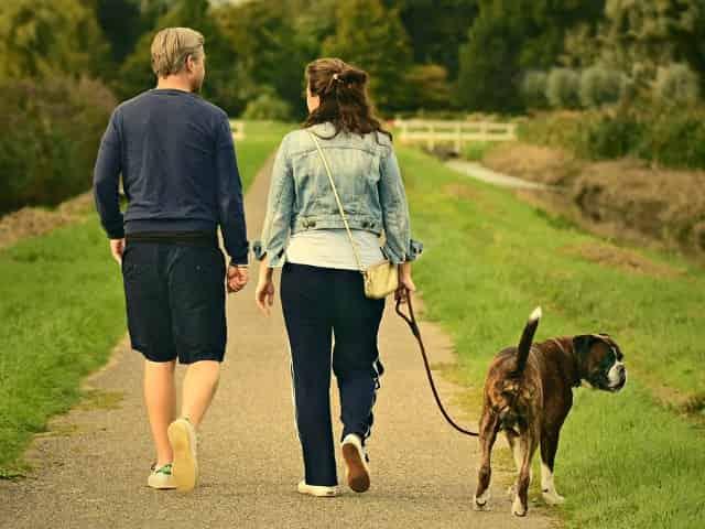 pet friendly dog walking hotspots in destin