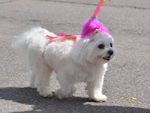 pet friendly destin puppy parade