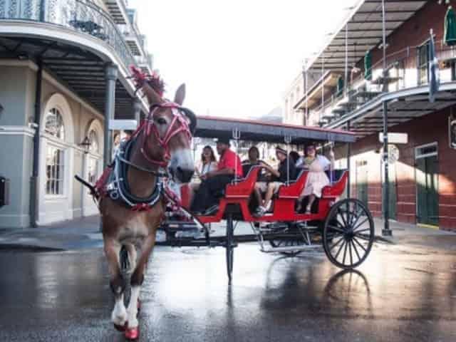 Carriage Rides & Tours