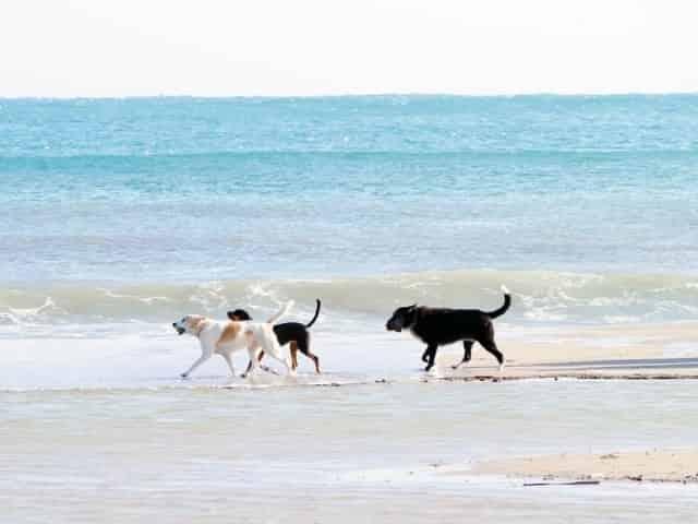 Dog public beach in</p><p></p><p>panama city beach