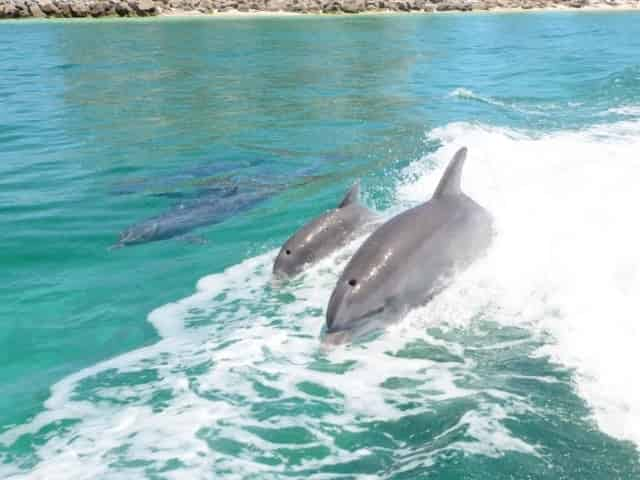 dolphins spotted on a Panama City Beach dolphin cruise