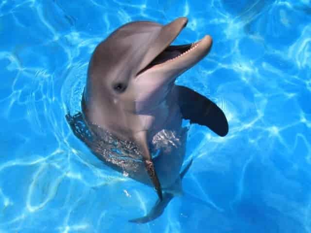 friendly dolphin at Gulf World Marine Park