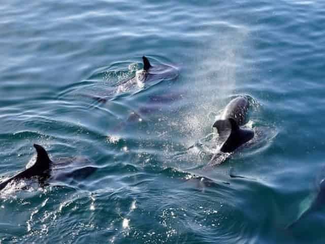 dolphin sightings on a kids pirate cruise