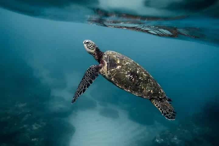 Sea Turtle Nesting Season on the Gulf Coast
