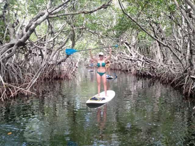 paddleboarding through the mangroves in islamorada
