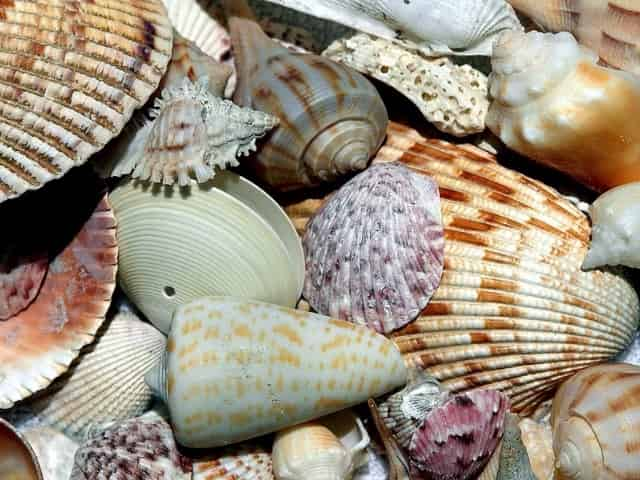 small group shelling tour on marco island florida