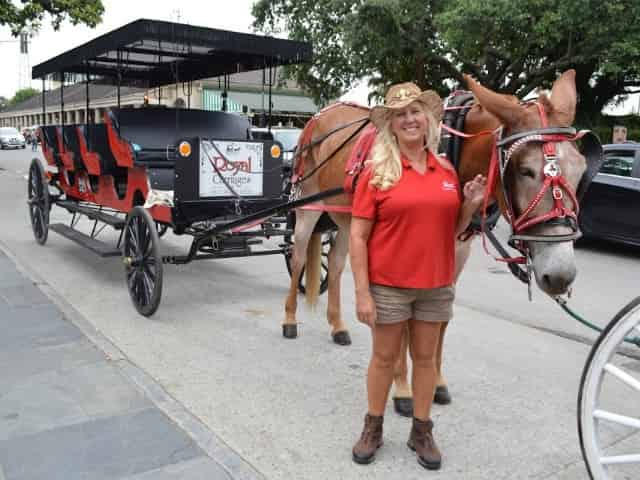 carriage tour in new orleans
