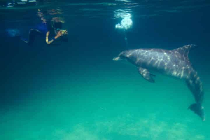 Do's and Don'ts When Swimming with Dolphins