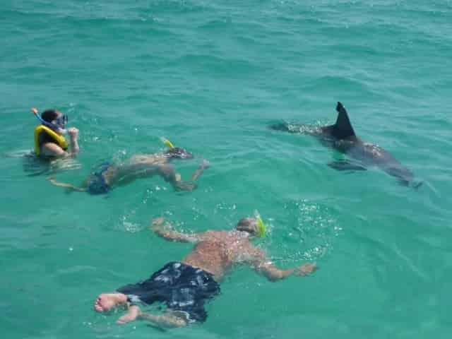 swimming with dolphins at shell island