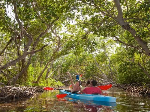group kayaking through the mangroves in key west florida