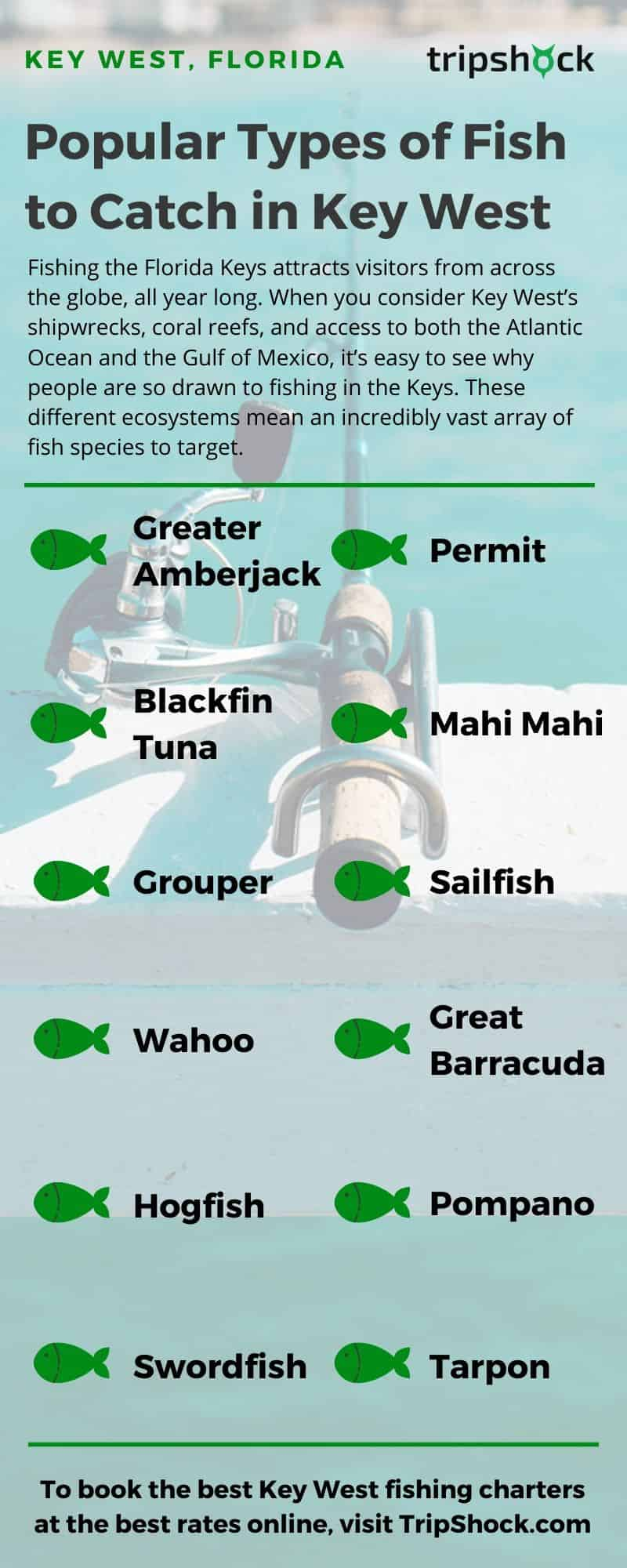 popular types of fish to catch in key west