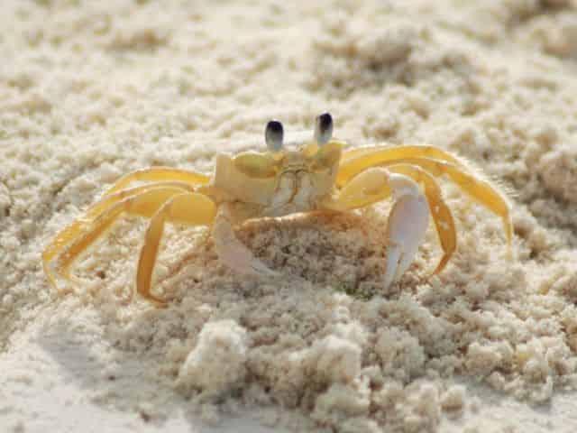 crabs on the beach