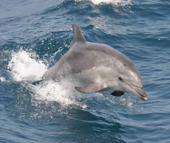 myrtle beach sc dolphin cruises for families