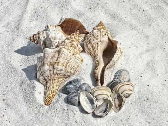Seashells found on the Beach & Lagoon Shelling Excursion