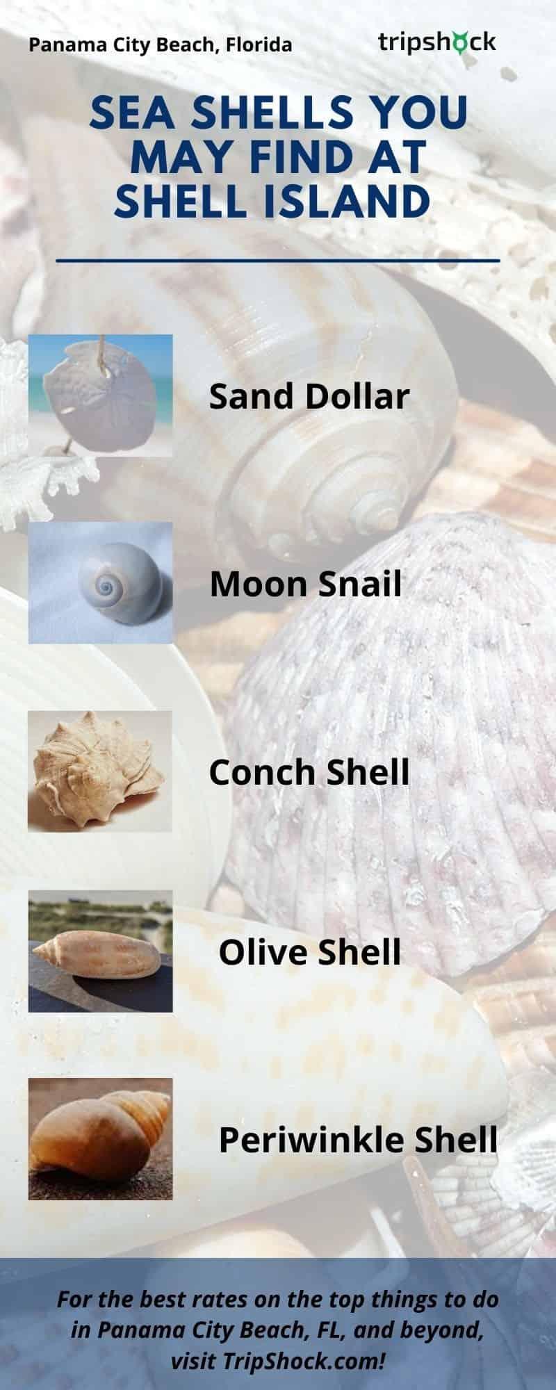 Sea Shells You May Find at Shell Island