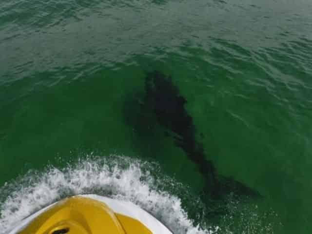 Dolphin spotted during a Pensacola Beach jet ski tour