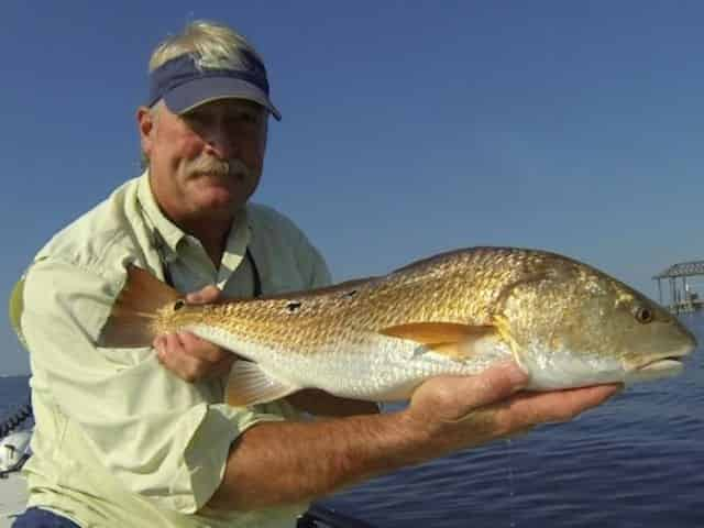Redfish caught inshore fishing in Pensacola Beach