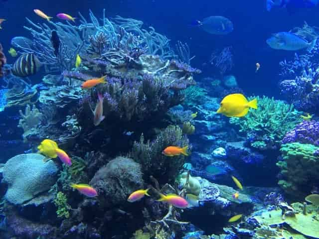 tropical fish swimming around beautiful coral
