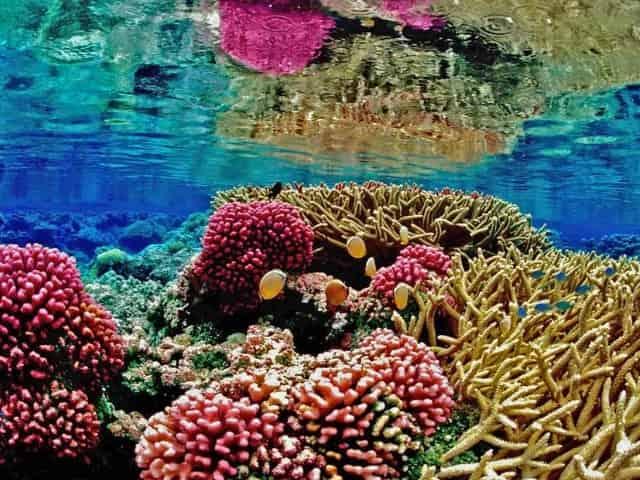 coral reef in Key West, FL