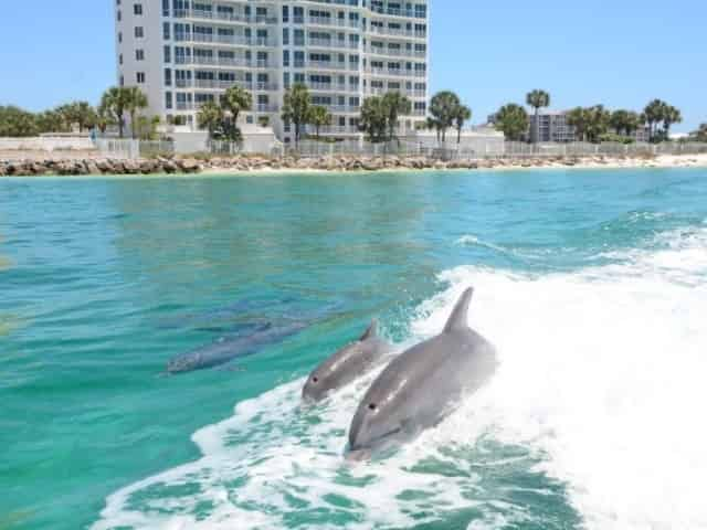dolphin cruise departing from downtown Destin