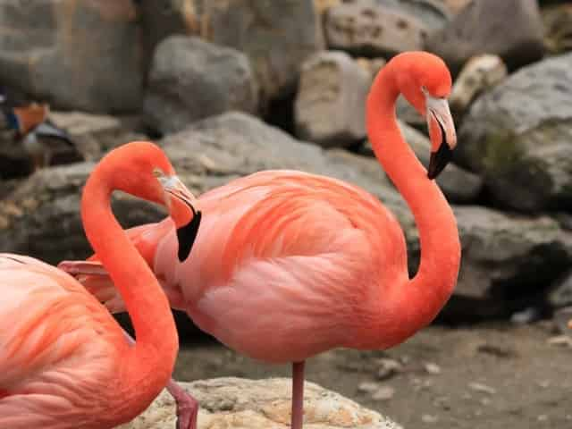 flamingos in downtown Fort Lauderdale