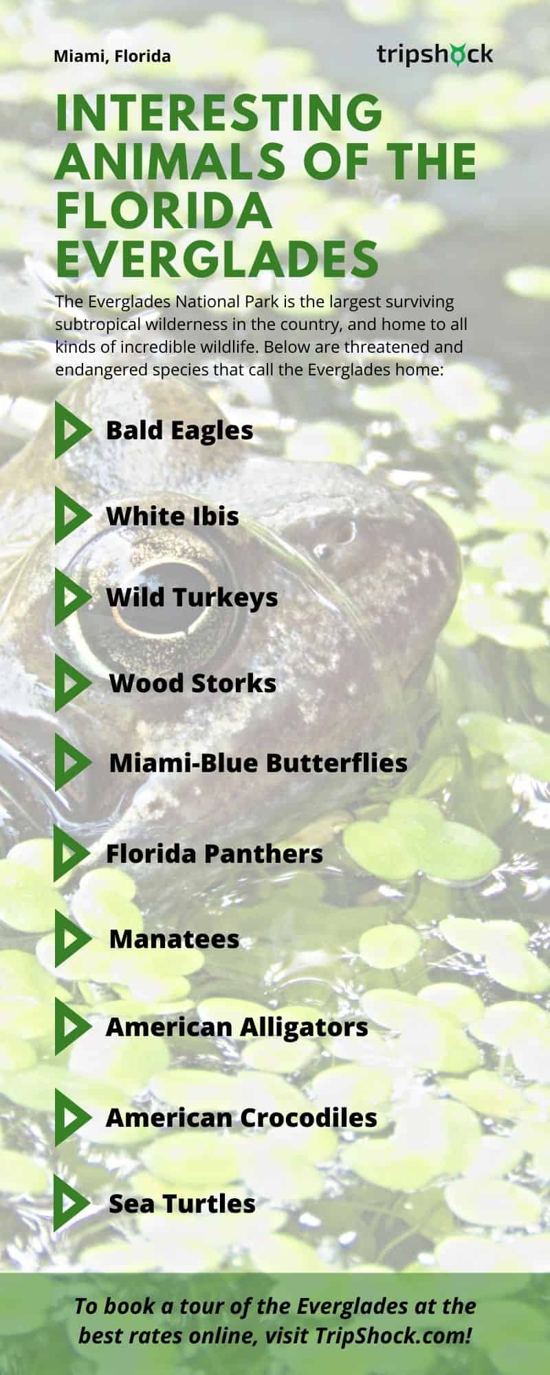 interesting animals of the florida everglades