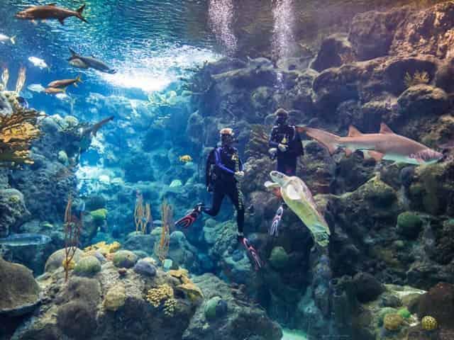 divers at aquarium in st pete, fl