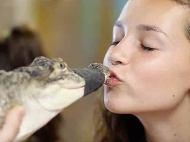 girl kissing alligator in st pete, fl