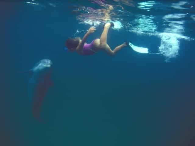 girl swims with dolphin in panama city beach
