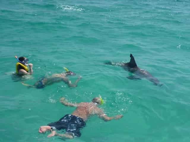 group swimming with wild dolphins in panama city beach