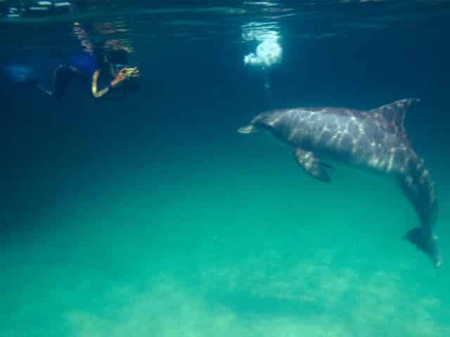 swimming with dolphins in the wild on a tour