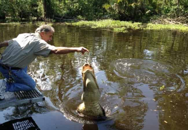 man feeding gator on a new orleans swamp tour