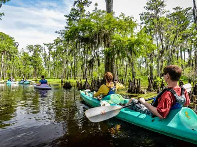 kayak through the new orleans swamp